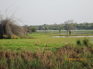 "Marshy land  of the Erai Dam lake in ""Buffer Zone""."