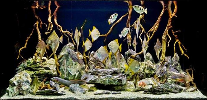 Mengenal Hardscape Akuarium
