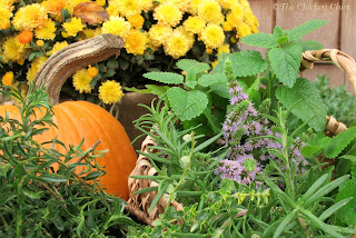 The strong scent of certain herbs may interfere with the ability of rodents to smell danger, thereby repelling them from the area of the chicken coop.