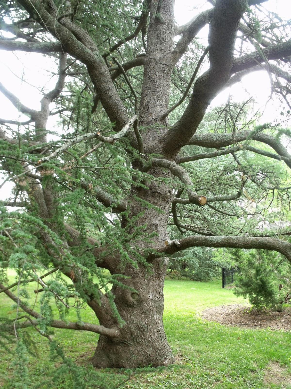 Great looking tree for Garden trees memphis