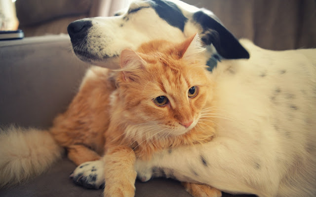 Dog Hugging Cat Animals Friendship HD Wallpaper