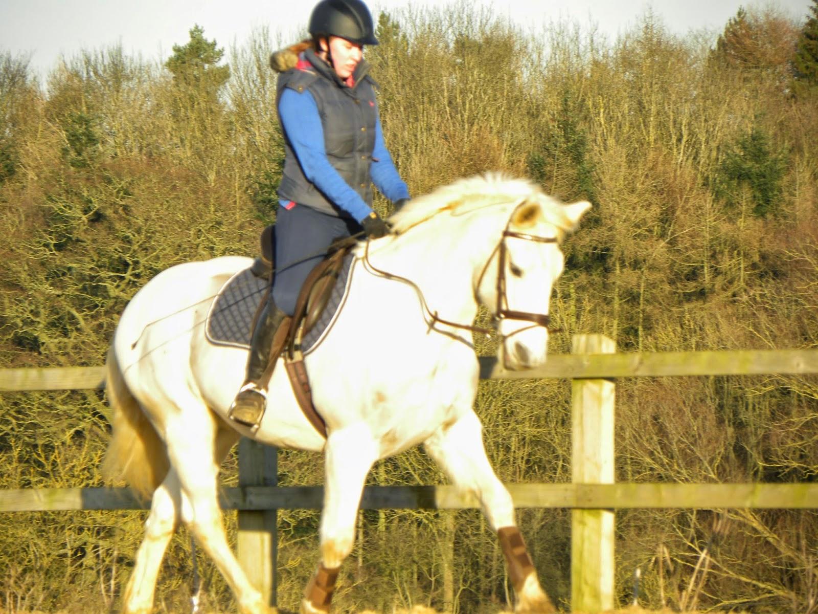 LB Equestrian