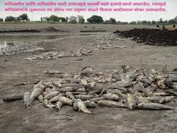 Dead Fishries