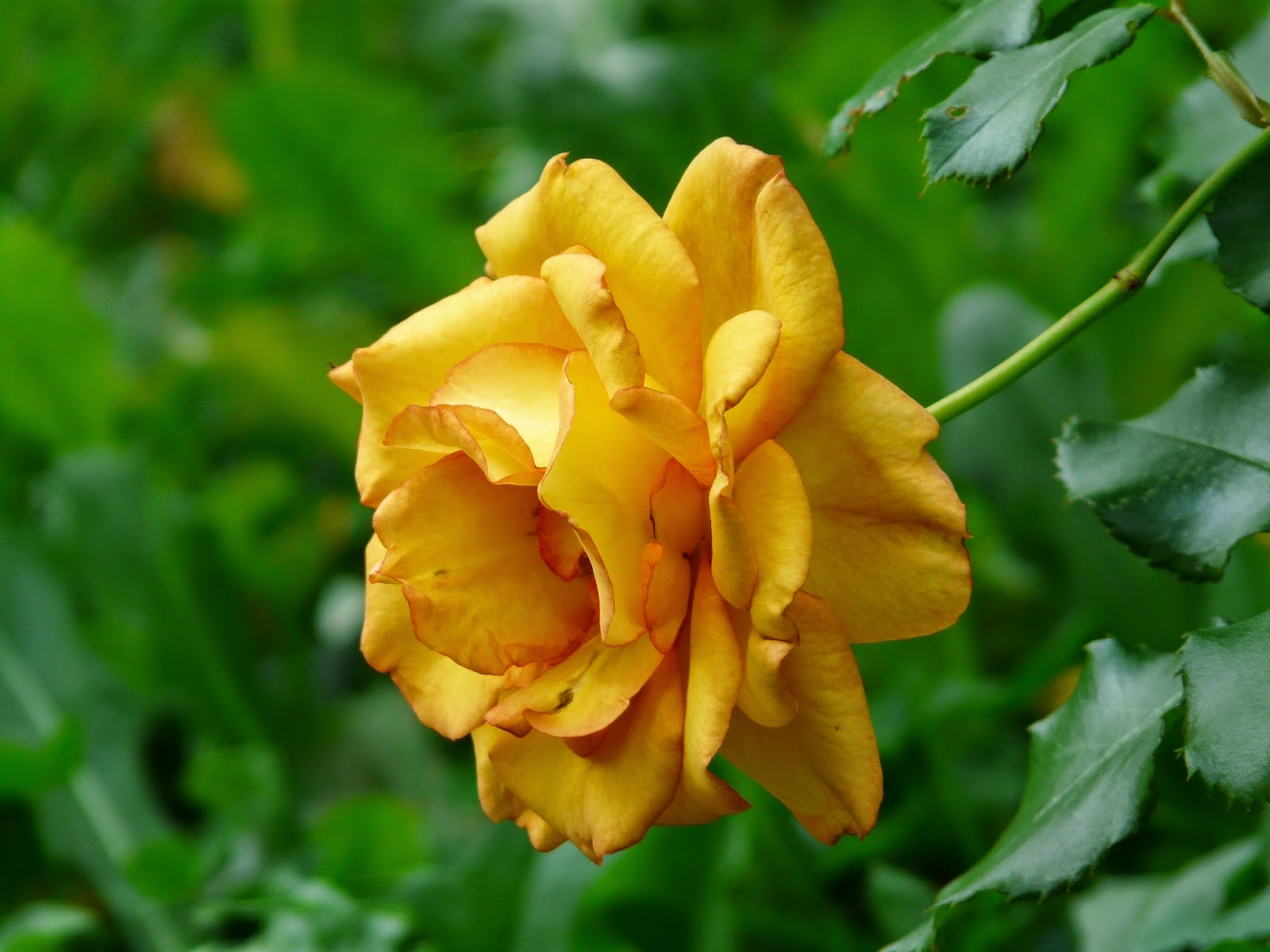 صورة صفراء جميلة