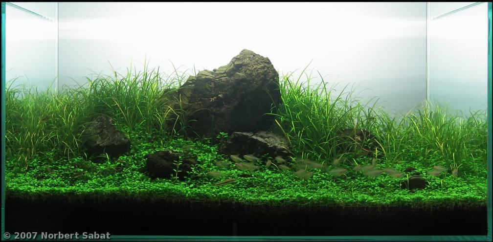 Nature aquarium guida allestimento plantacquario for Legni per acquario