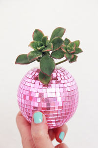 Disco Ball Succulent