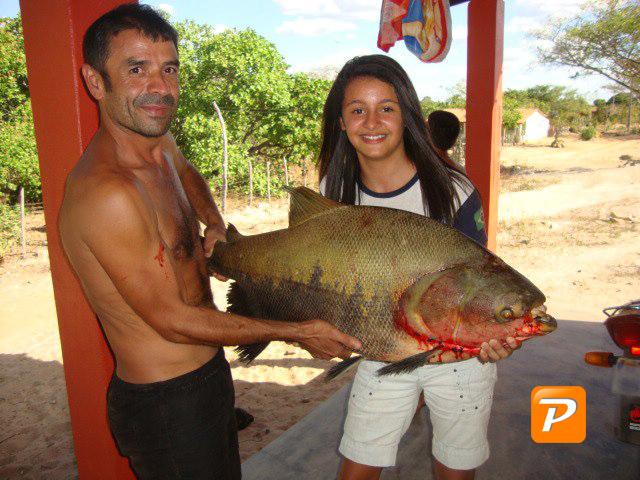 Pescador fisga peixe de quase 20 Kg em Juá dos Vieiras