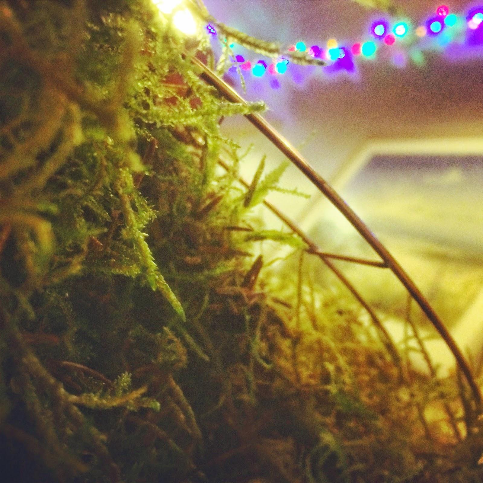 Christmas wreath making workshops, Birmingham B30.. Tuckshop Flowers.