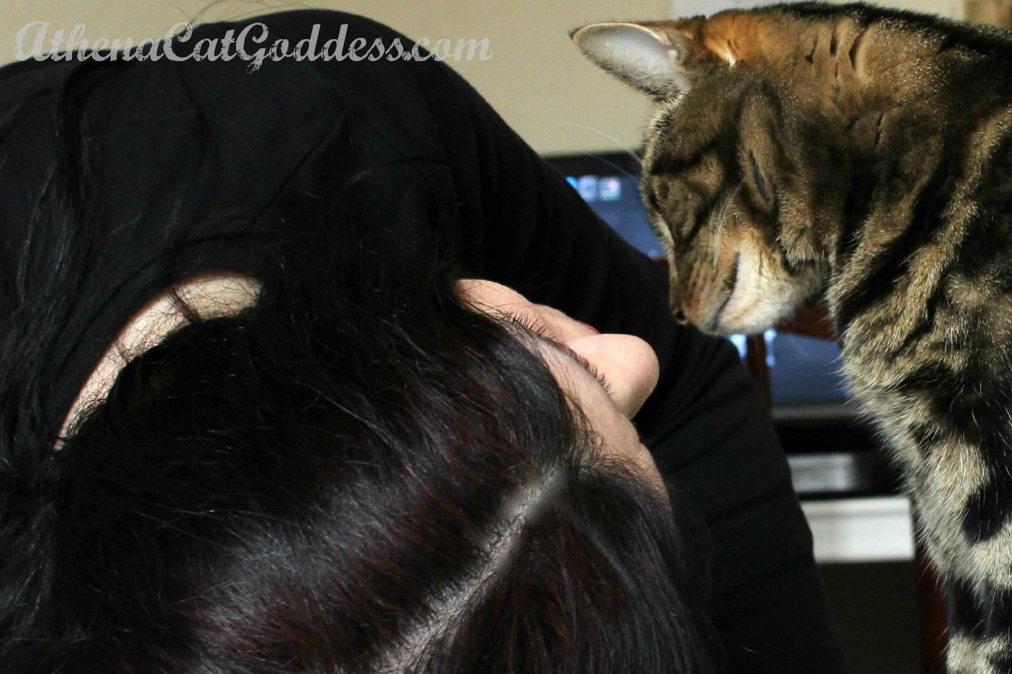 cat and human bond