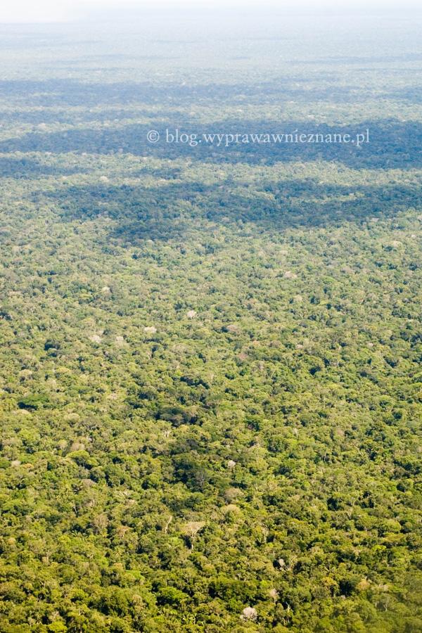 dżungla amazońska z okna samolotu