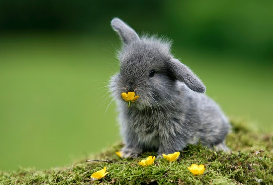 A picture of a bunny eating a flower.