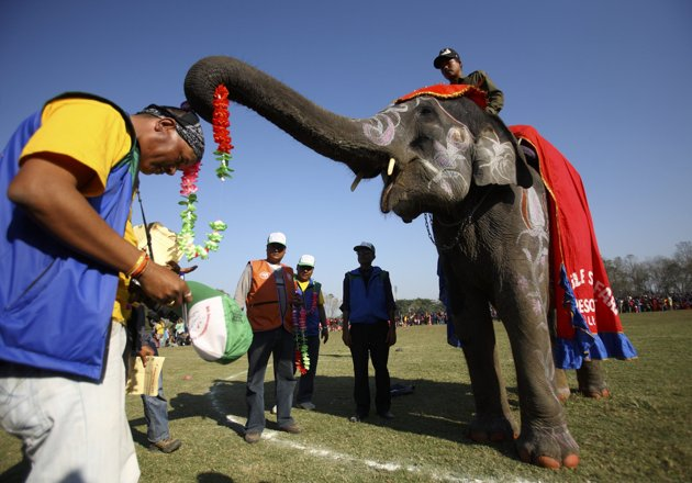 Gambar | Pertandingan Gajah Tercantik di Nepal