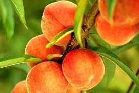 Durazno la fruta de la eterna juventud