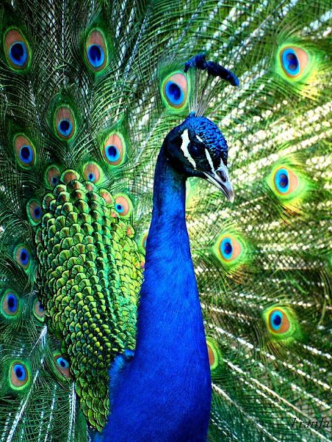 Sitios turisticos de guatemala - Fotos de un pavo real ...