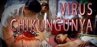 Chikungunya-signos-síntomas
