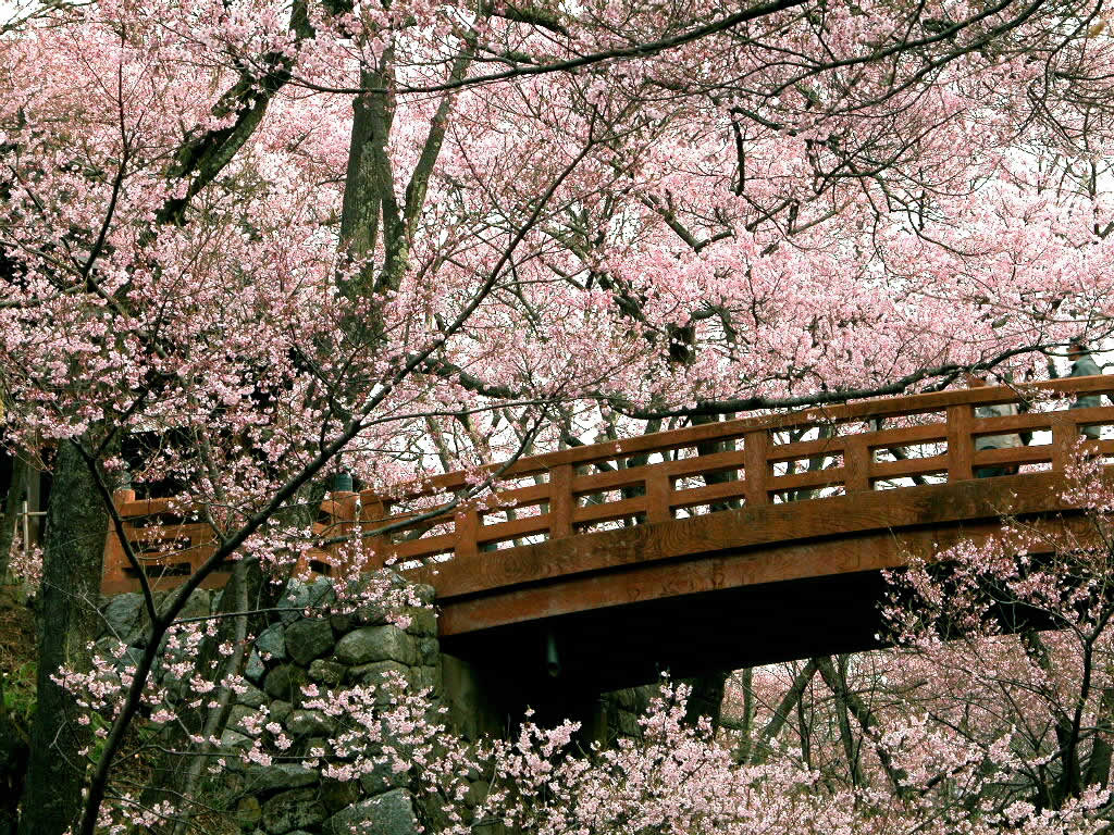 http://4.bp.blogspot.com/-2vKpxzGB4us/Tcl_AKgqvEI/AAAAAAAAAa8/t9sGq3KxSkk/s1600/Japanese+Wall+Art+and+Cherry+Blossom+Art+Wallpaper.jpg