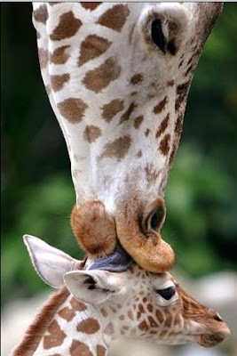 Beautiful animals kiss