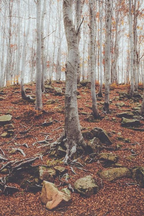 fotos otoño bosques