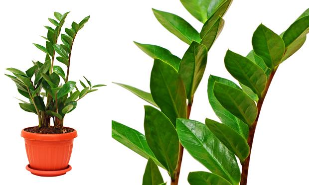 plantas de jardins tipos : plantas de jardins tipos: Jardins de Inverno ou Internos!!! E 20 Plantas ideais para ambientes