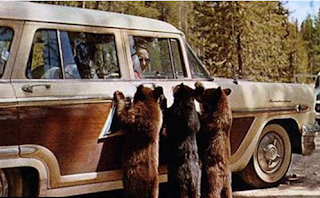funny picture of three bears beside the car