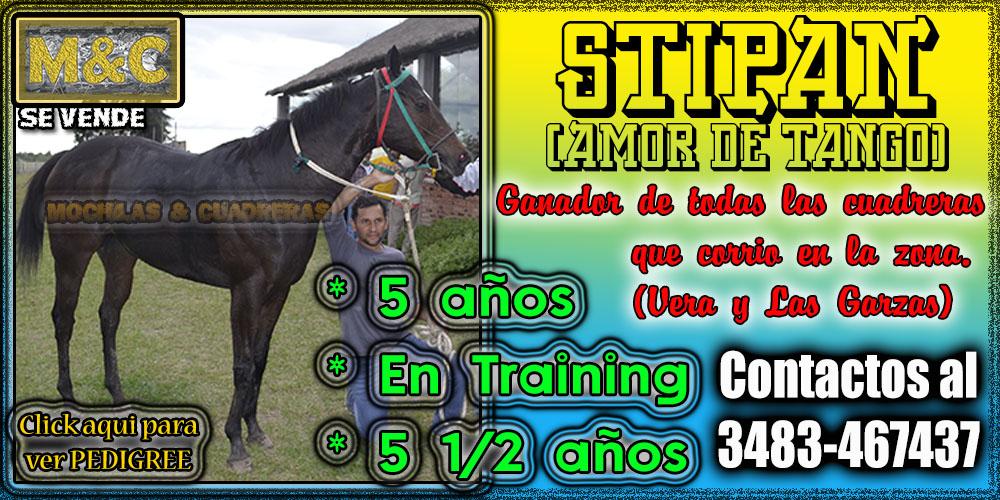STP-24/04