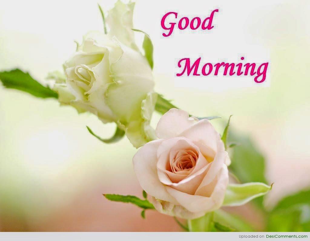 Good Morning Beautiful Photos Download : Top good morning beautiful pictures free download