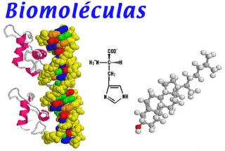 Resultado de imagen de Biomoléculas
