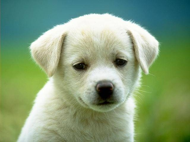 informasion sobre los perros: