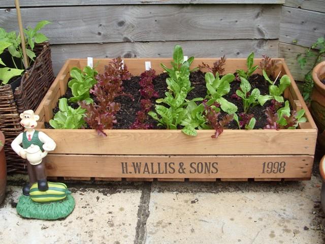 My Garden Me Instant Vegetable Garden
