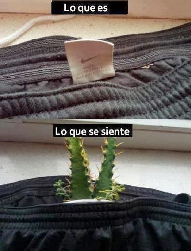 La etiqueta de la ropa...