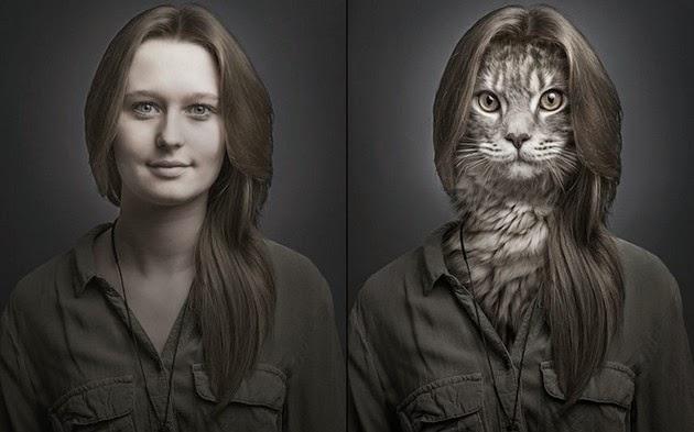 Transplants-Cats-Faces-3