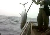 Gila Mancing Dapat Ikan Tenggiri Jantan ( Wahoo )
