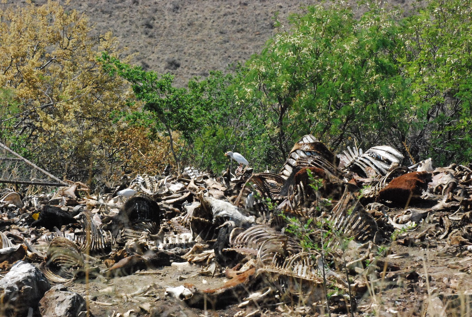 African Children Starving Vulture Place of the vultures andAfrican Children Starving Vulture
