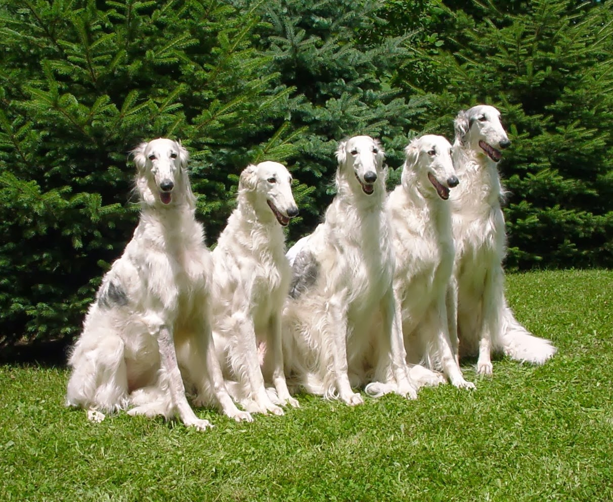 Russian Hunting Dog Breeds