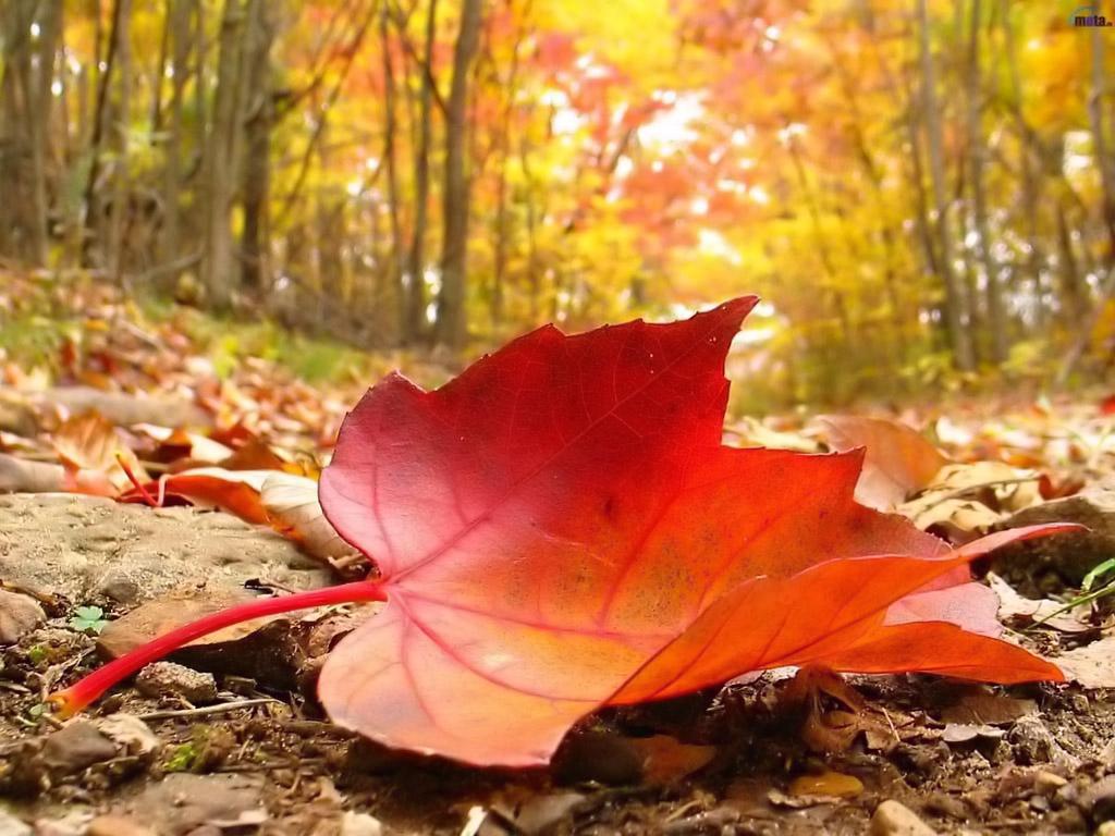 Indeed Nature S Giftshop