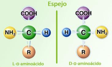 L- y D- aminoácidos