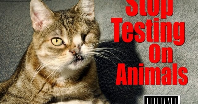 Animals 4ever petitions please sign and share for Fish amoxicillin petco