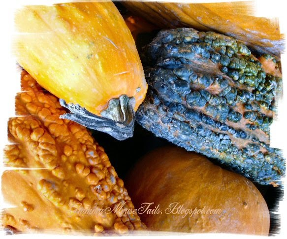 warty colorful gourds photo