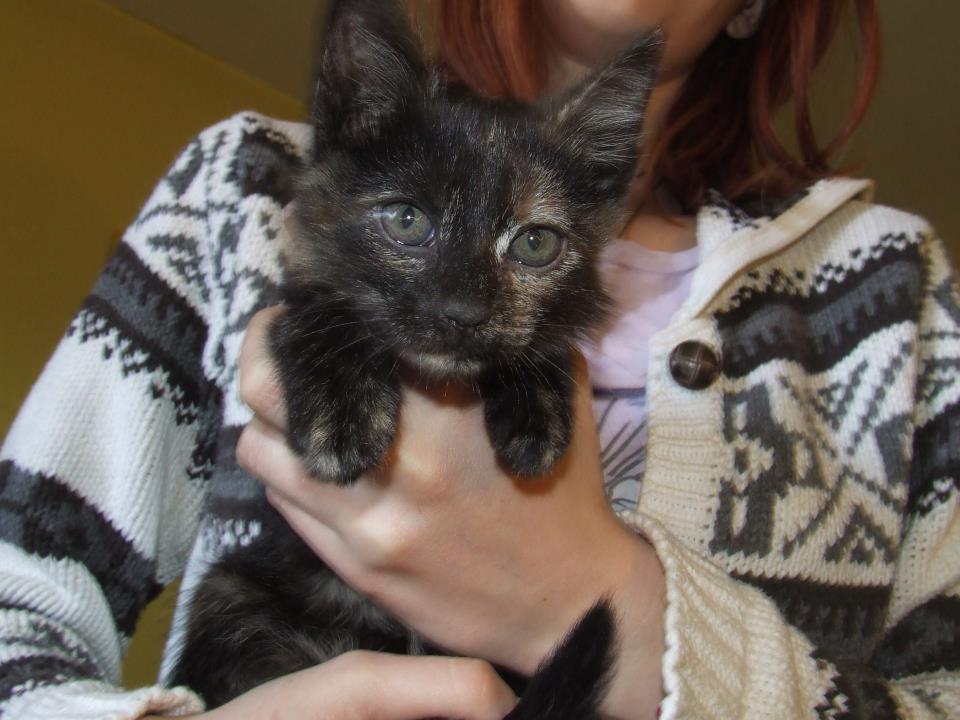 Adoptie Pisici - Pisica Karma