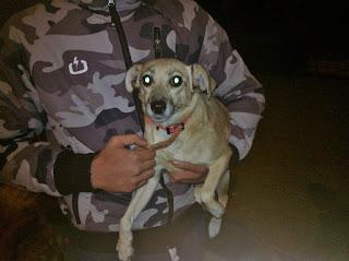 Βρέθηκε μικρόσωμο σκυλάκι στον Νέο Κόσμο. Το ψάχνει κανείς?