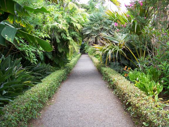 Canarias en el siglo 21 jard n bot nico del puerto de la for Jardin botanico en sevilla