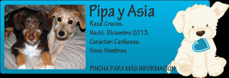 http://mirada-animal-toledo.blogspot.com.es/2013/04/pipa-y-asia-dos-cachorritas-en-busca-de.html