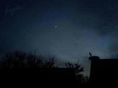 nocne bociany w Krysiakowie
