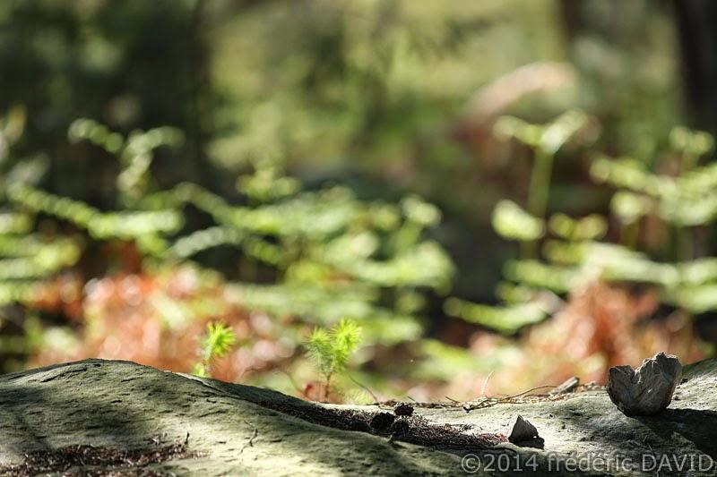 nature rocher grès pierre forêt Fontainebleau