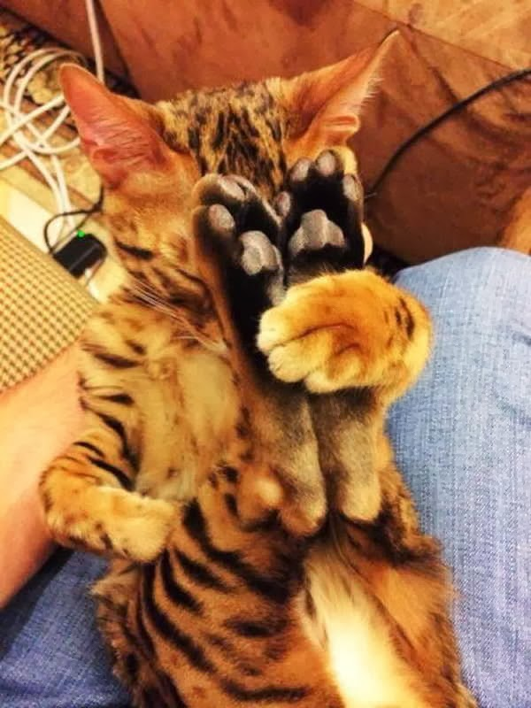 Funny cats - part 80 (40 pics + 10 gifs), sleeping kitten hugs his legs