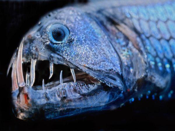 Best animal news 24 jul 2011 photos deep sea creatures for 94 1 the fish