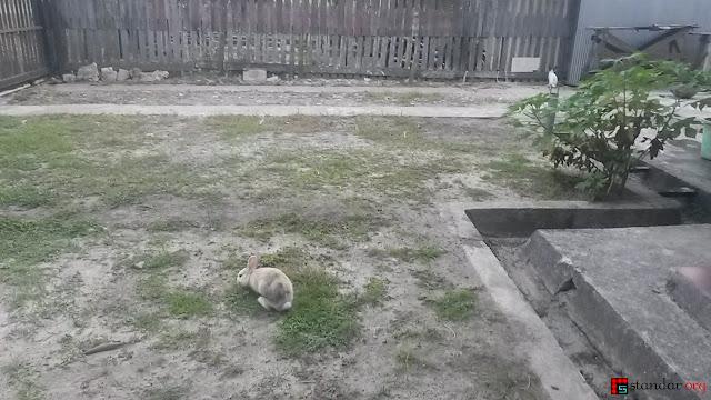 Rumput Tetanggaku Ternyata Memang Lebih Hijau-2