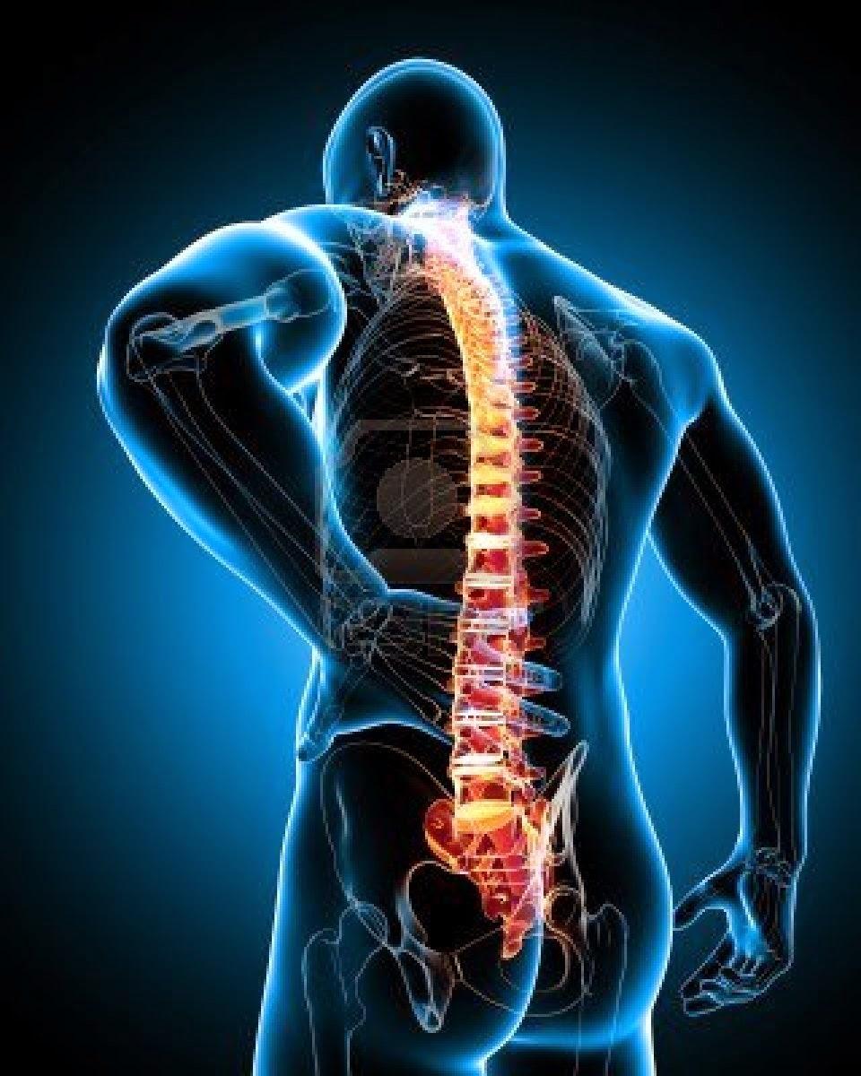 Sheynyy y de pecho los departamentos de la columna vertebral componen