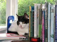 Cat sitting next to books