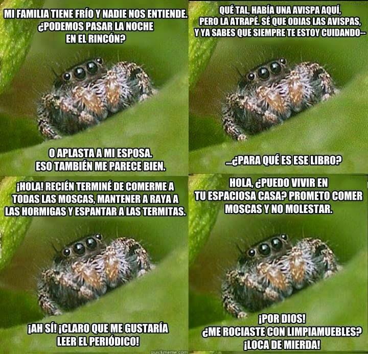 La araña amable